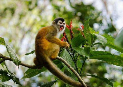 Monkey_Slider_titi