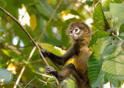 Monkey_slider_encanta