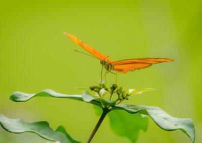Wildlife_slider_Encanta