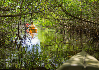 mangrove_kayak