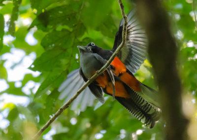 Birds_mating_encanta